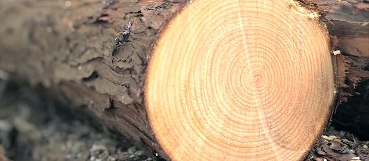 ひろしまの木で、暮らそう